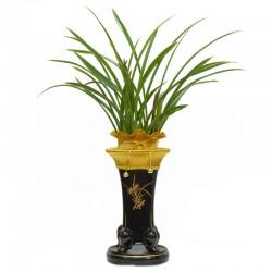 Saimdang Orchid(OFD-001)