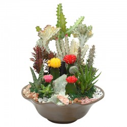 Mixed Cactus (OFH-017)