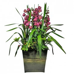 Red Cymbidium2(15010901)