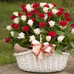 100 Roses - Cutie Honey (14081402)