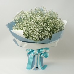 Gypsophila memories (18122706)