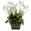 Condolences orchid (1501072)