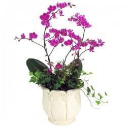 Manchunhong Orchid 4 (OFD-015)