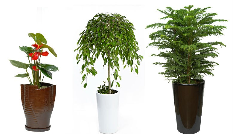 Plants for business open, exhibition, Birthday, Move house and more..